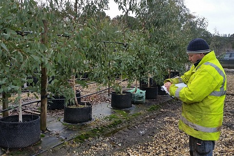 Tree Inspection 1