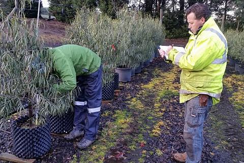 Tree Inspection 12