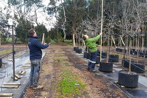 Tree Inspection 2