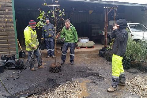 Tree Inspection 2 3