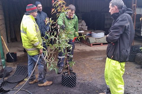 Tree Inspection 2 9