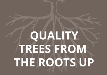 quality trees roots up