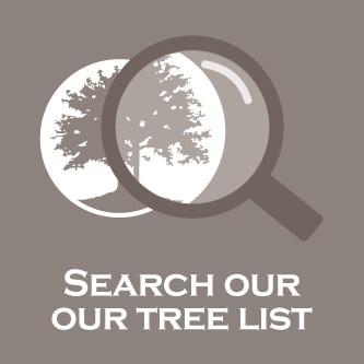 search advanced trees
