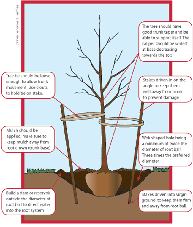 planting guide w