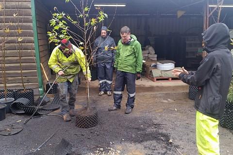 Tree Inspection 2 1
